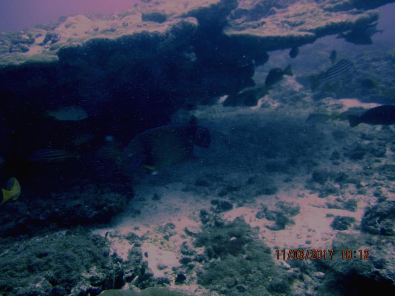 Coral fish 2
