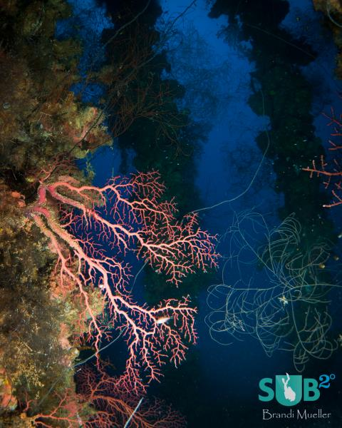 Coral Growth on the Wrecks of Chuuk