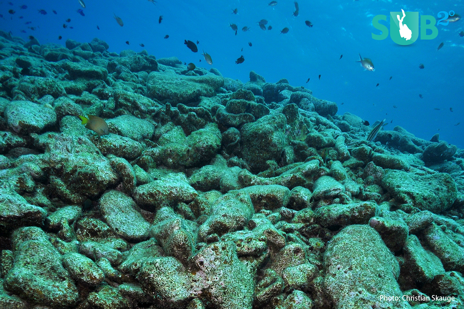 The remains of a dead coral reef