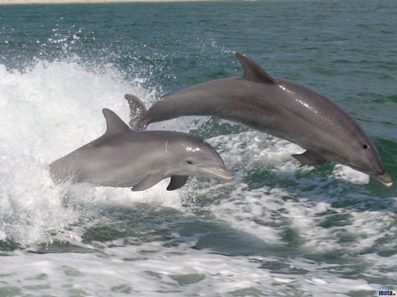 delfini 08