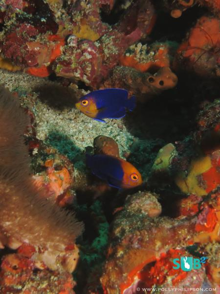 Discover Rare and Unusual Fish Life