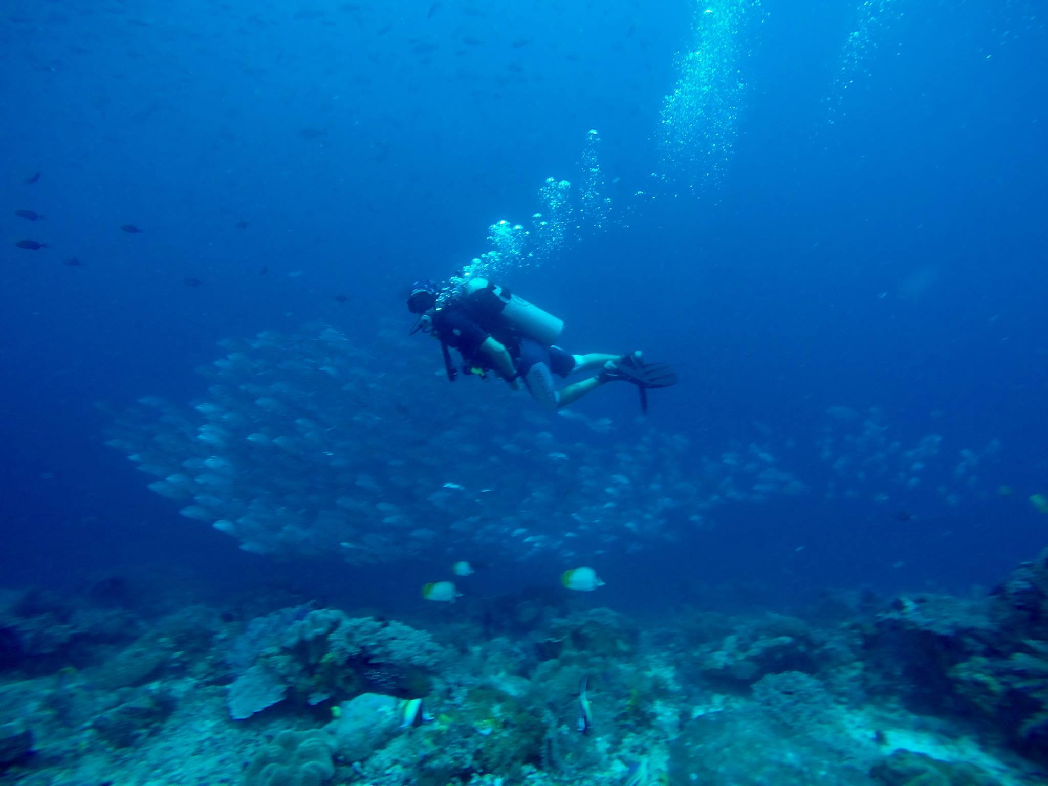 Check out the podcast interview on diving and travelling   http://ausbackpacking.com/podcast/diving-and-travel/