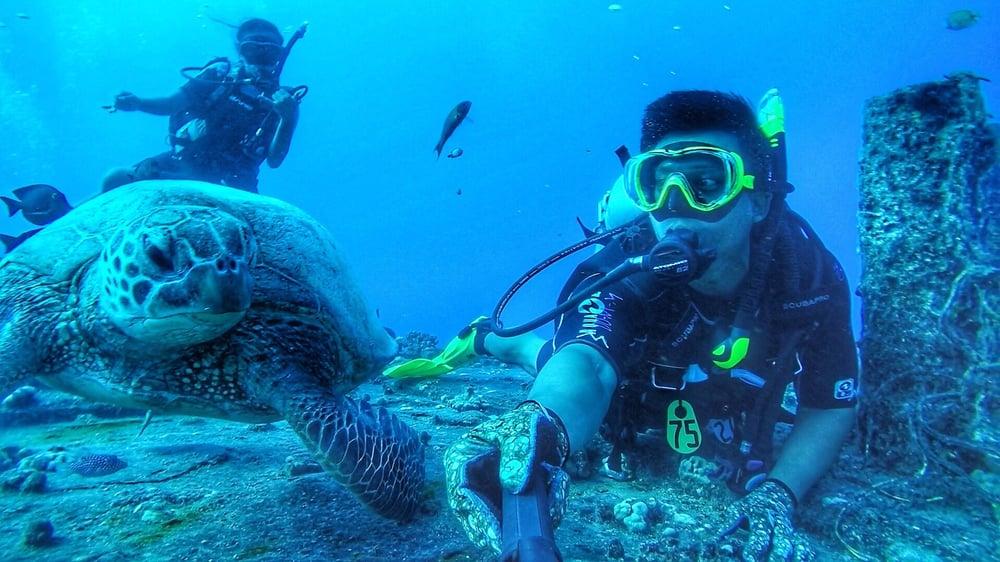 Dive Oahu - sea turtle