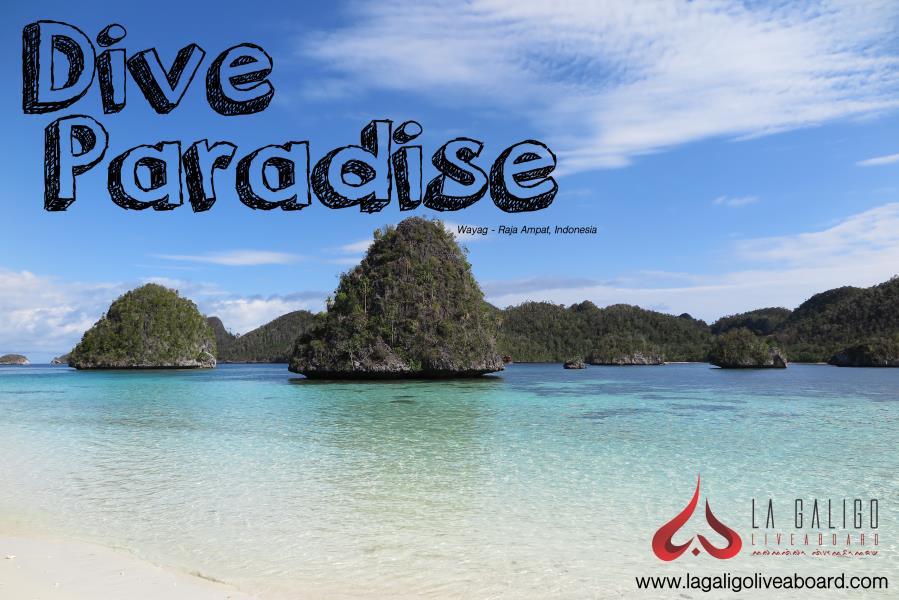 Dive Paradise