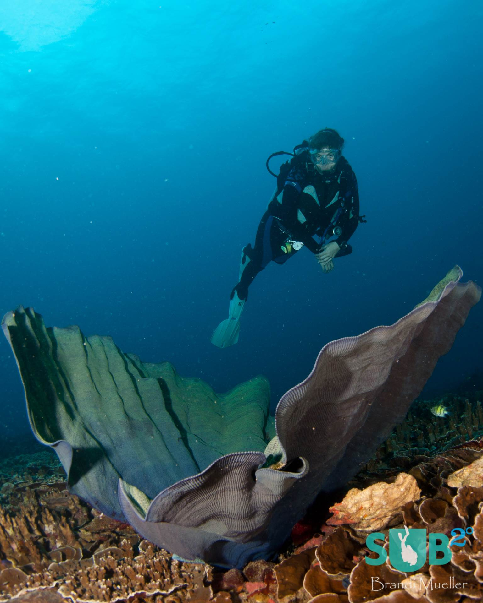 A diver observes the healthy reef of Guam.