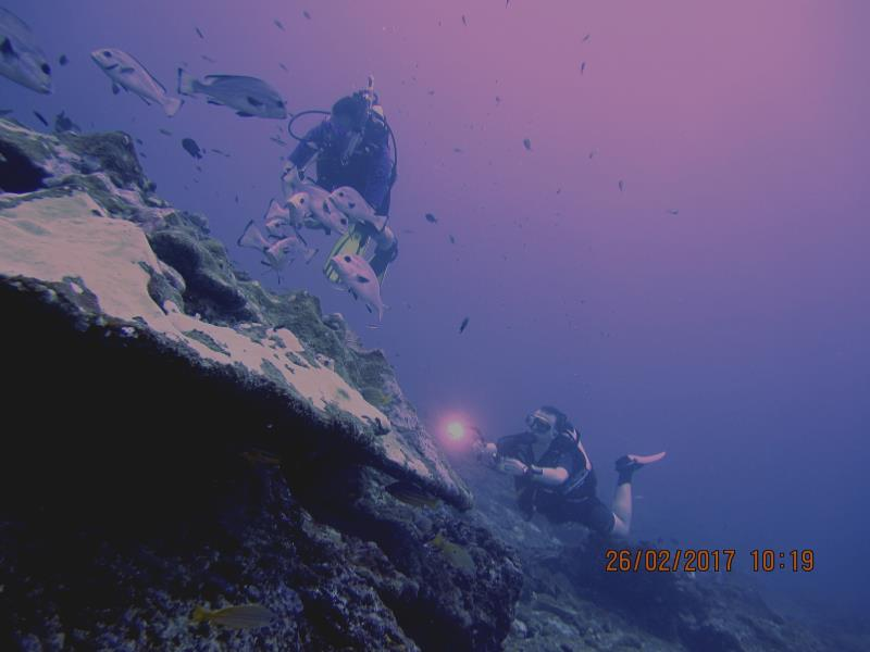 Diver water 4