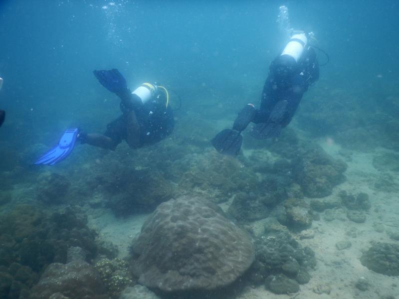 Divers!
