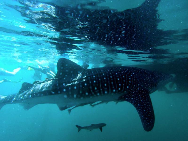 diving musandam