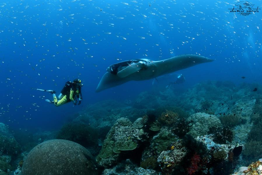 Diving with Daroyen Village