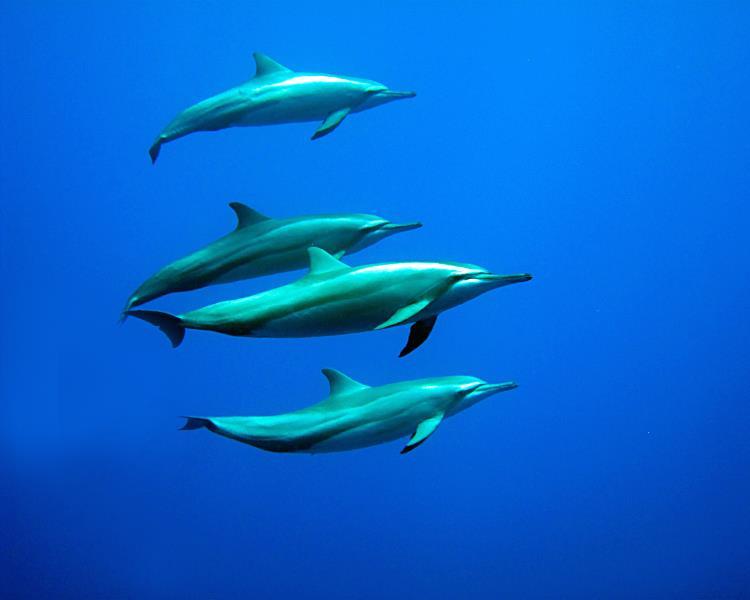 Dolfins