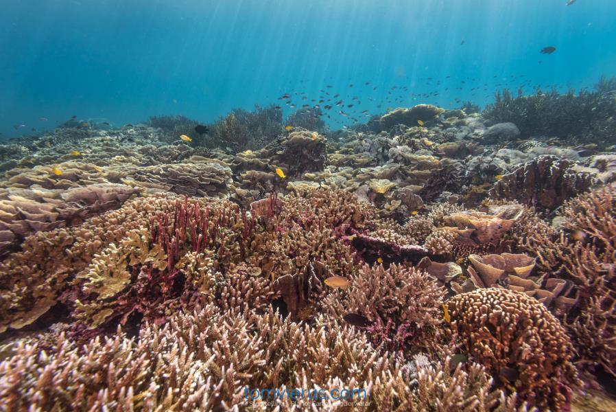Dream Reef, Tom Vierus