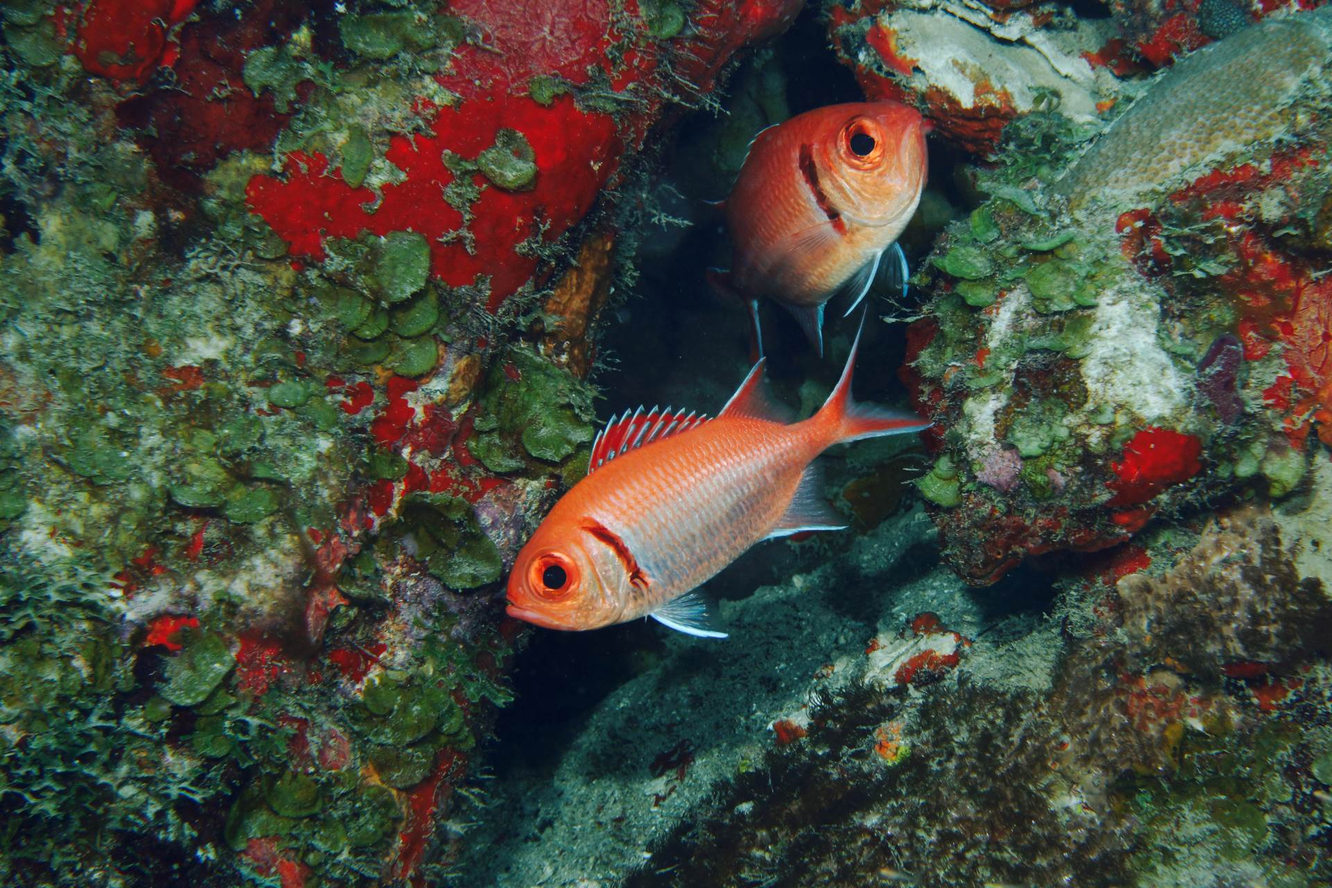please feature this on your instagram (photo credit goes to @photographylife.4u)  two squirel fish in nevis