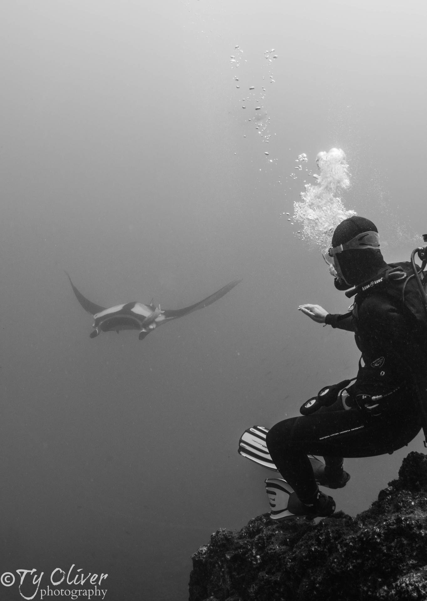 A diver prepares for a close encounter with an oceanic pacific manta ray.