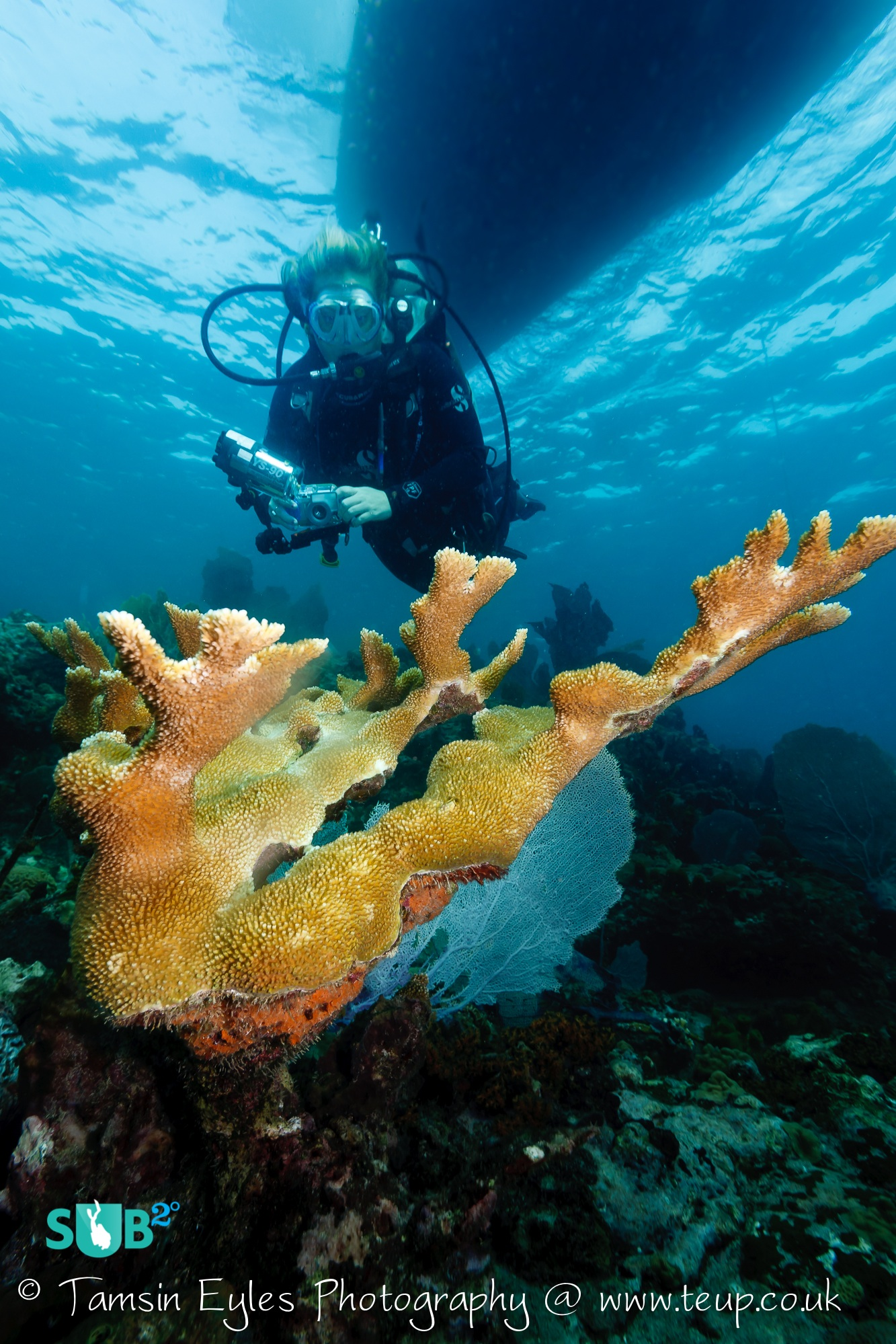 Divers find elkhorn coral formations along many of the reefs in Bequia. Photo courtesy of Tamsin Eyles.