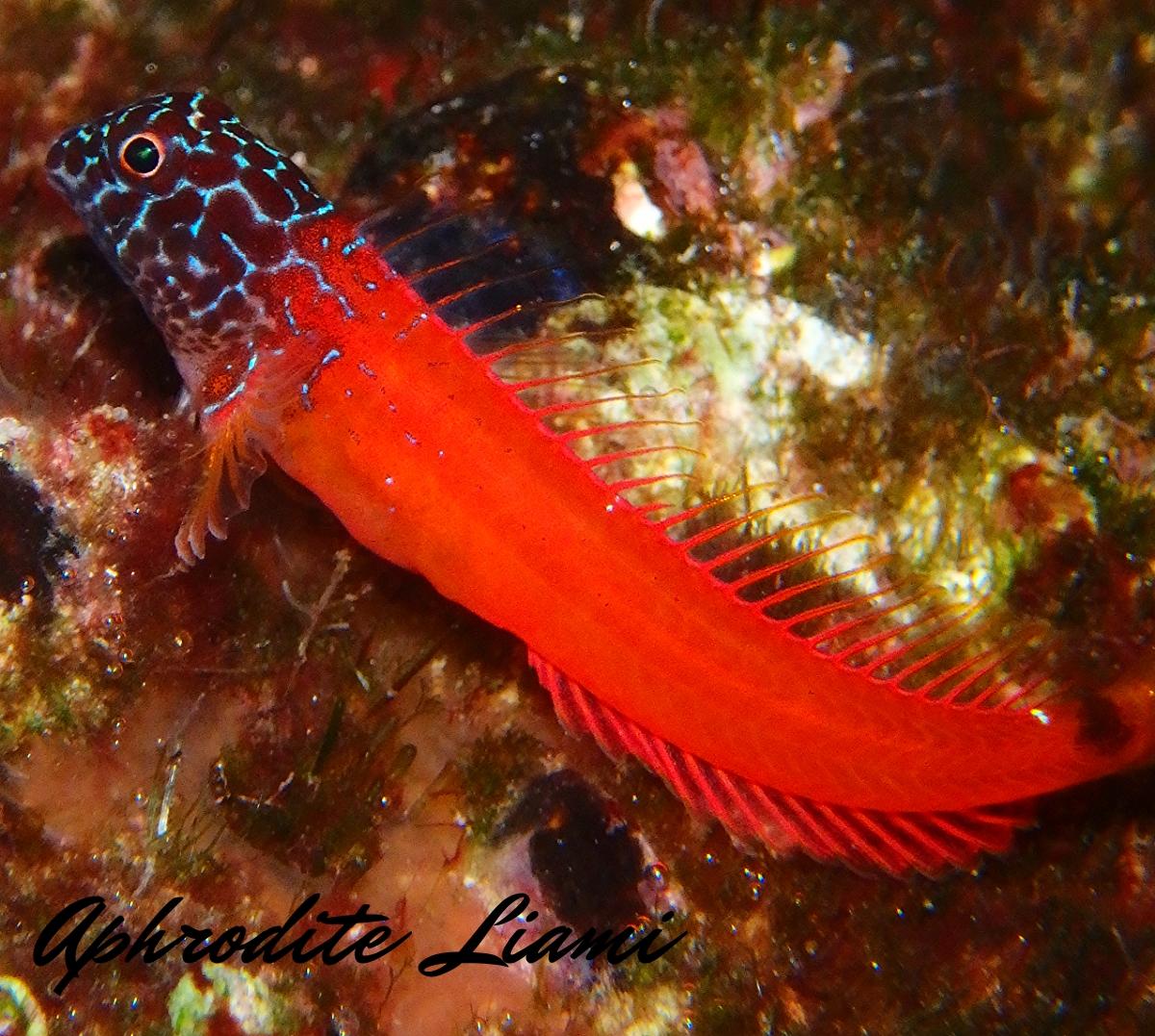 #wreck #boat #ship #sea #marine #sealife #marinelife #crab #seastar #starfish #star #crab #tubeworm #worm #nudibranch #fish #life #eco #animal #diver #diving #scubadiving #scuba #dive #photo #photography #greece #kos