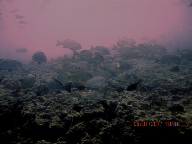 Fish 5