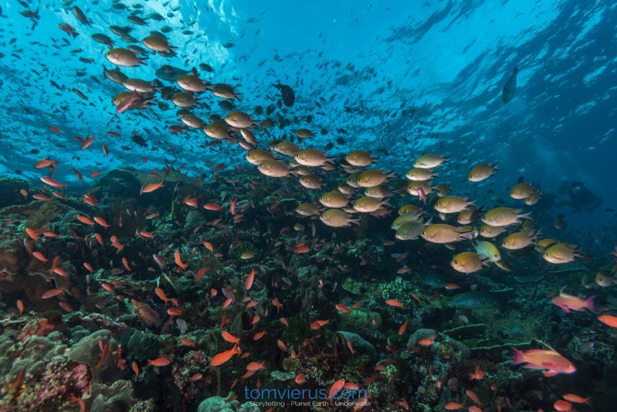 Fish Abundance, Tom Vierus