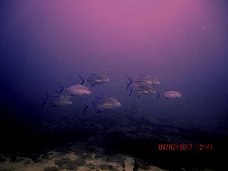 fish group large