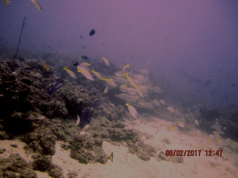 Fish lots 3