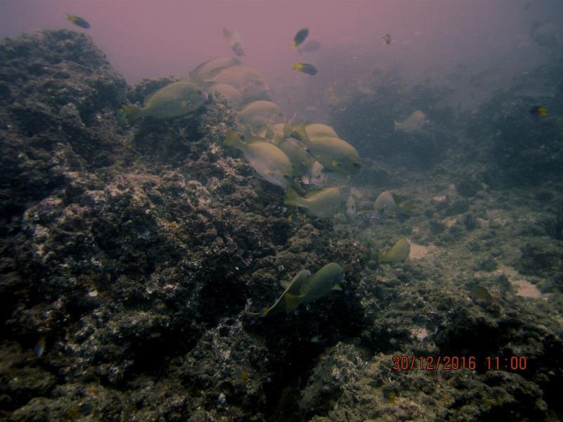 Fish Rock2