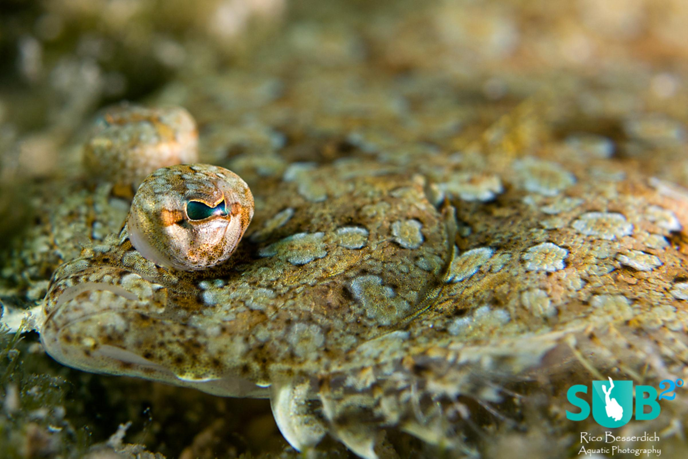 Marine animals that trust their own camouflage are ( once we've spot them ) easy to approach.