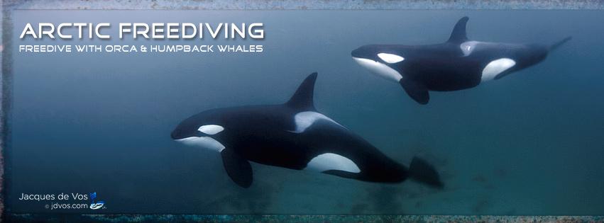 www.arcticfreediving.com