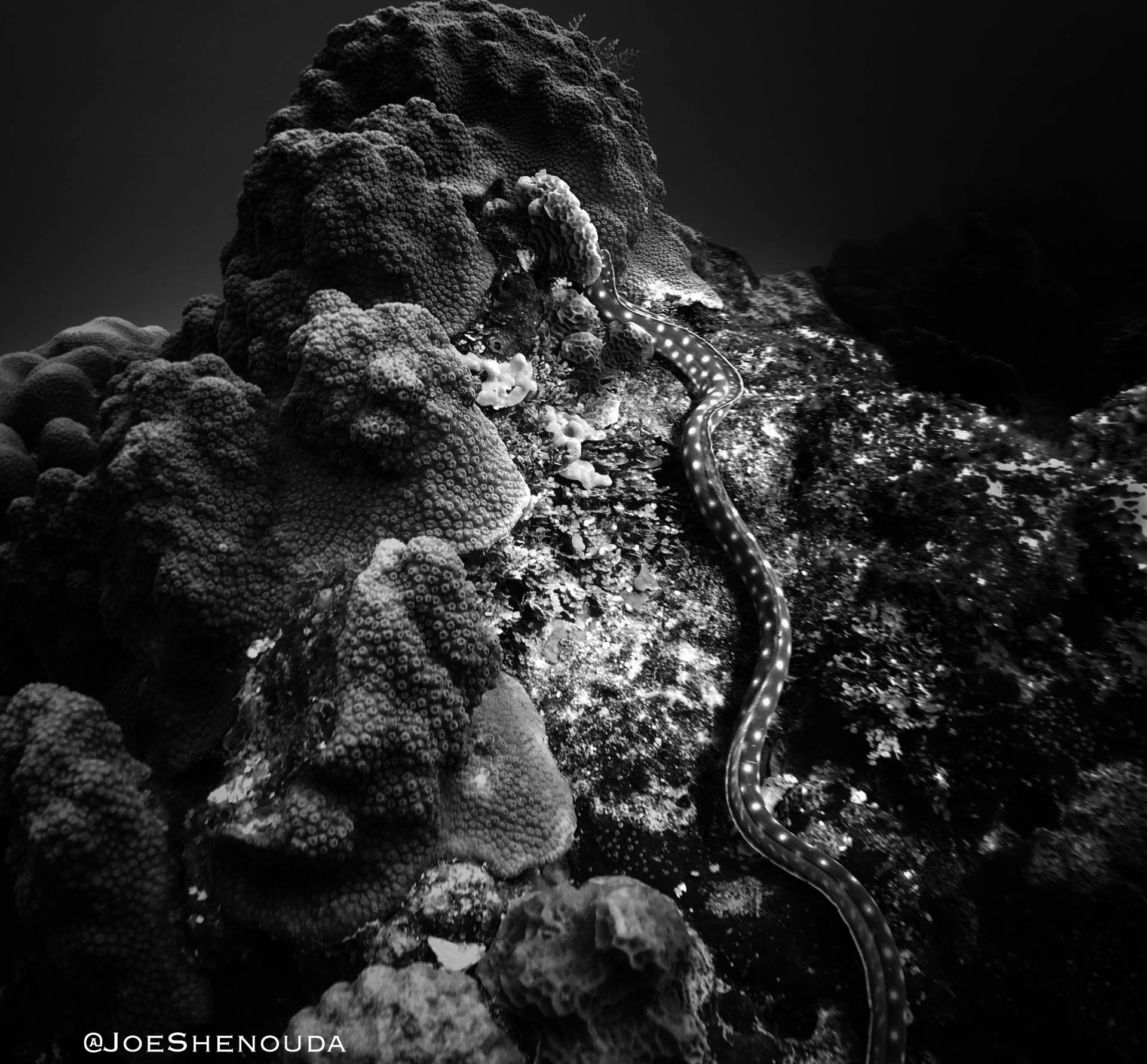 """""""For most people, this is as close to being an astronaut 👩🏼🚀as you'll ever get. It's leaving planet Earth 🚀 🌏 behind and entering an alien 👽 world."""" (Golden Sand Eel in Cozumel 🇲🇽)"""