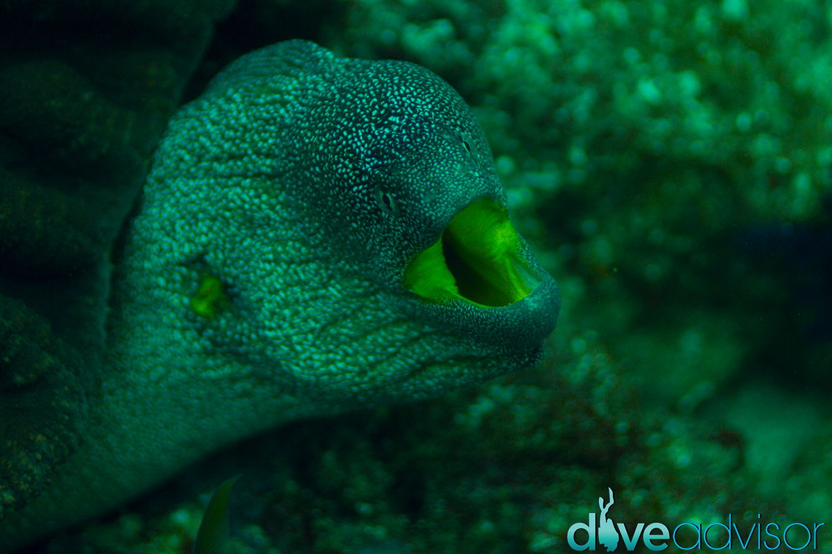 I really liked the color of this moray's mouth.
