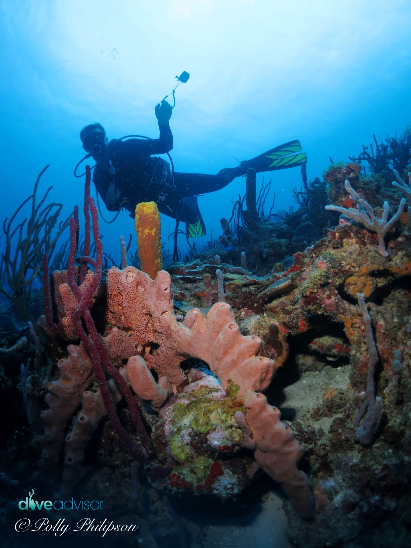 A diver cruises along the pretty dive site called Purple Rain. Many different soft and hard corals decorate the sloping coral reef.