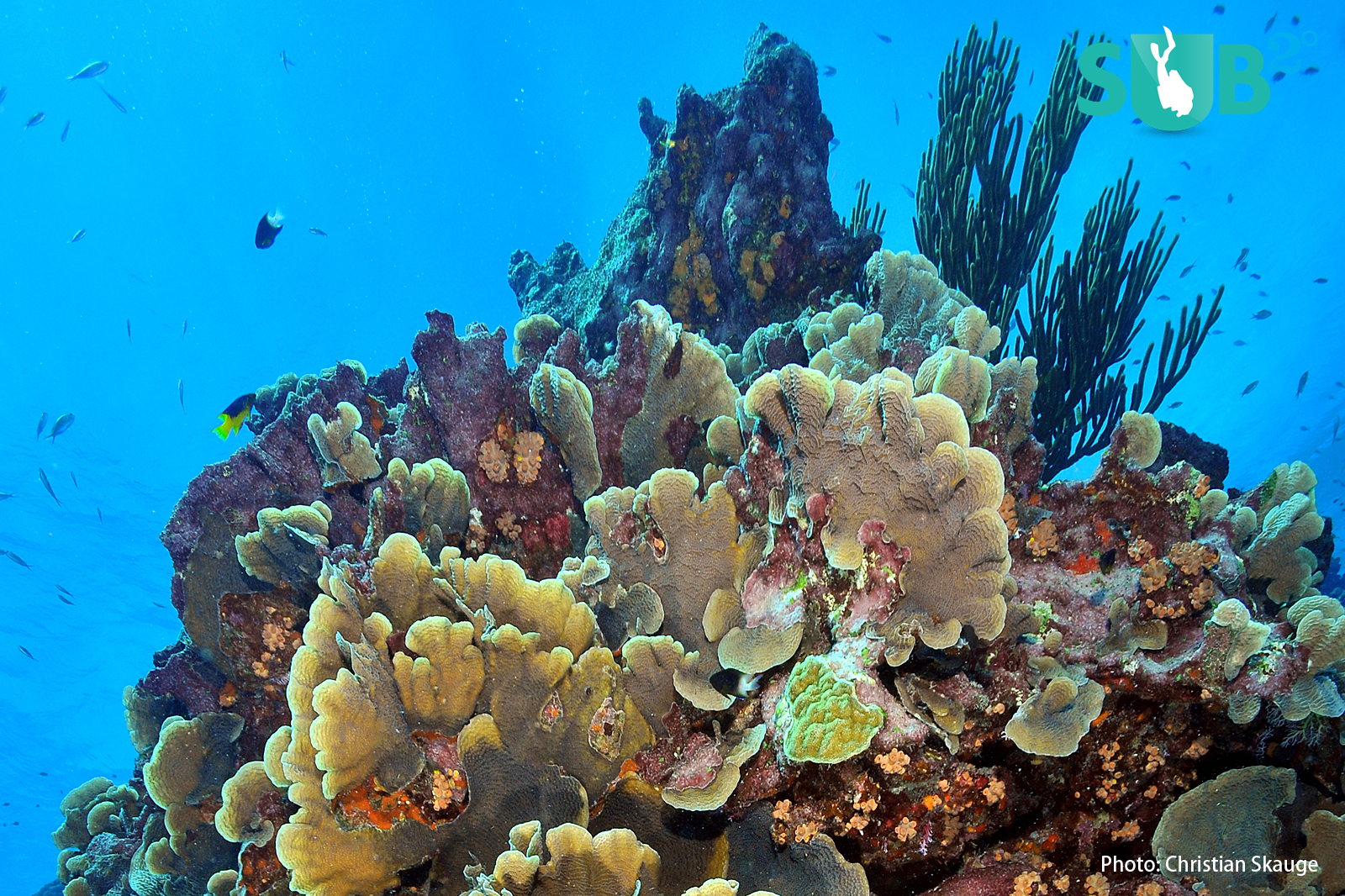 A colourful and healthy coral reef- the 'Rainforest' of the sea