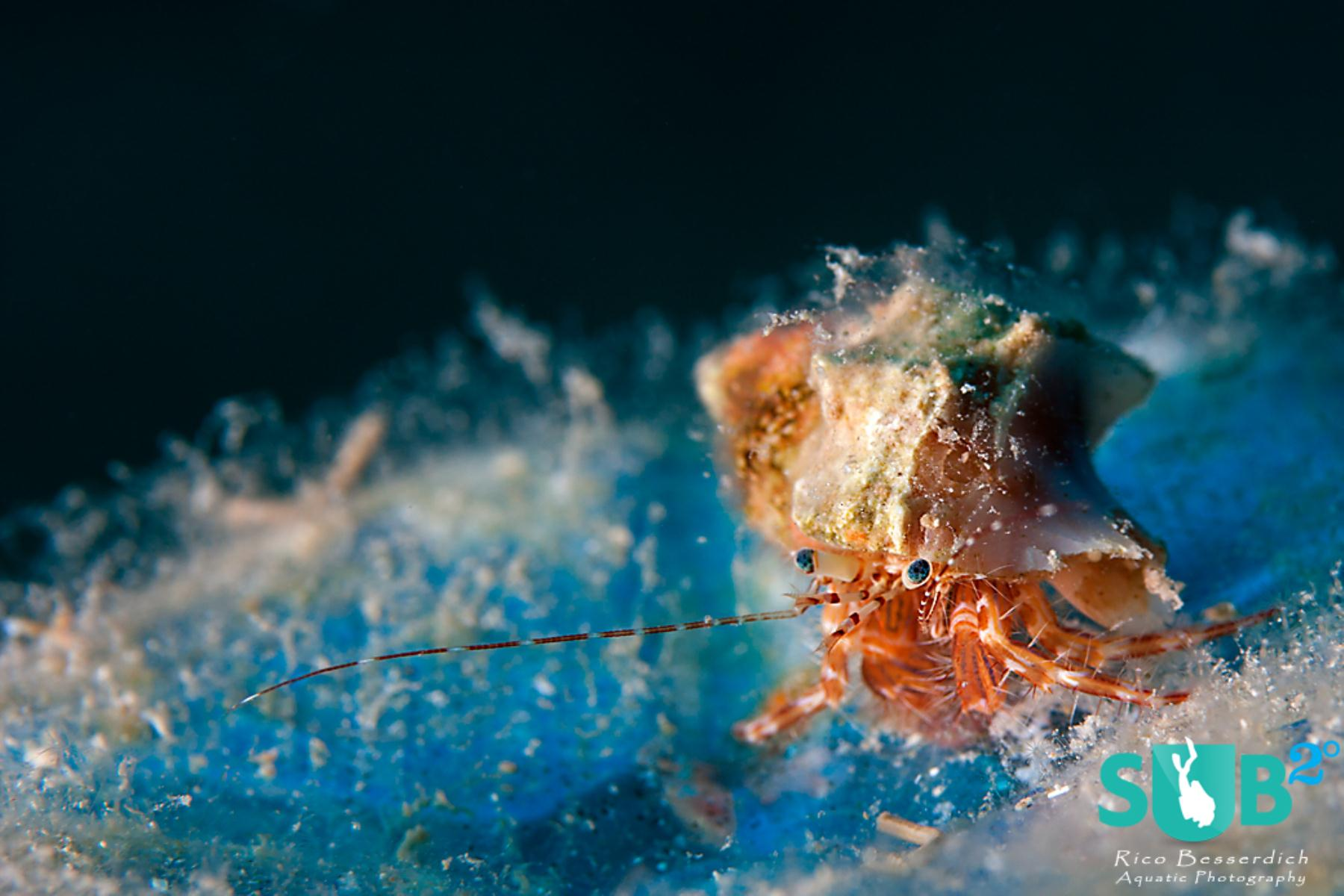 This tiny hermit crab is placed on the lower right intersection of the rule of thirds grid.