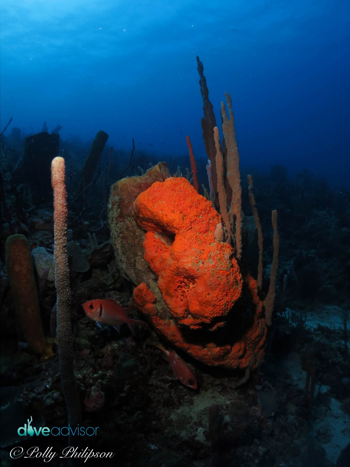 Huge Sponges Dominate the Reef