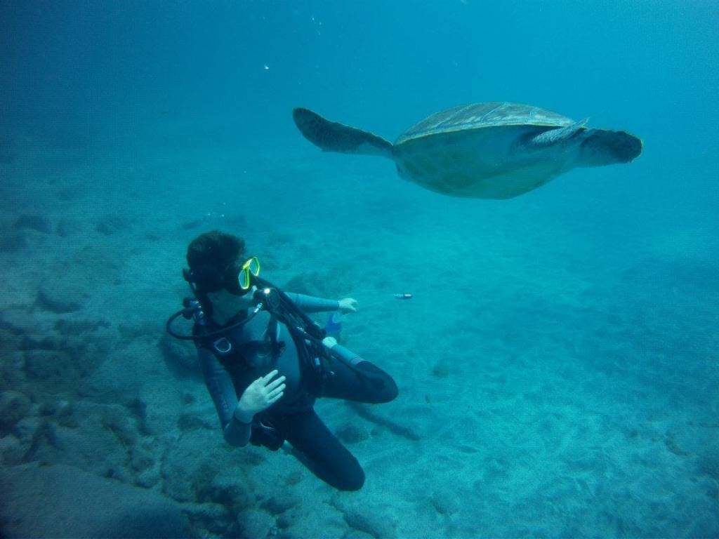 Me in Tenerife with a turtle