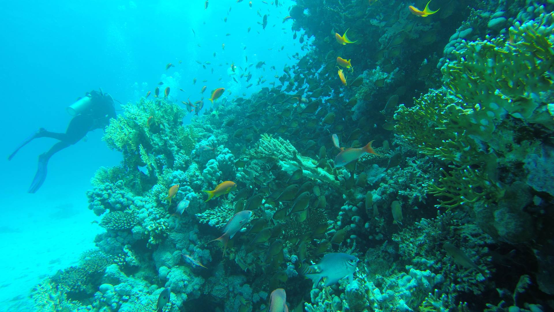 Discover of fascinating reef life of Hurghada