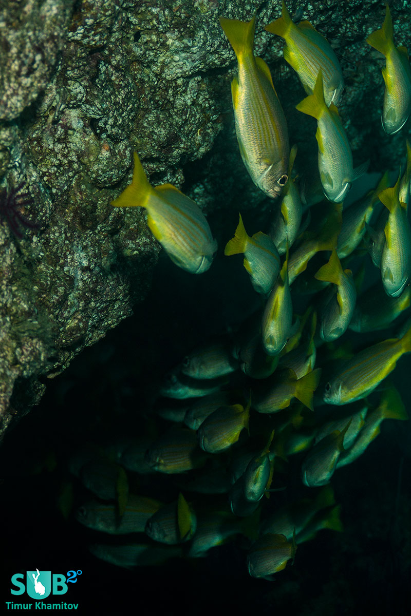 Nice dive with contrasting colors. Bright fish in a dark ish environment looks really cool.