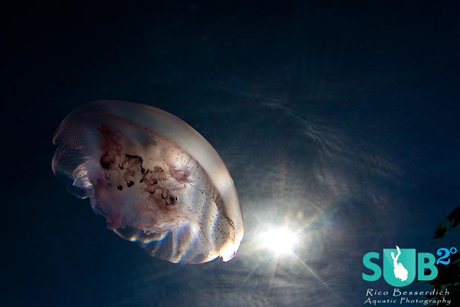 Jellyfish UFO