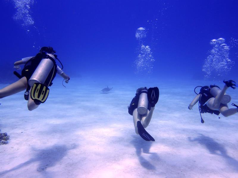 Junior Divers