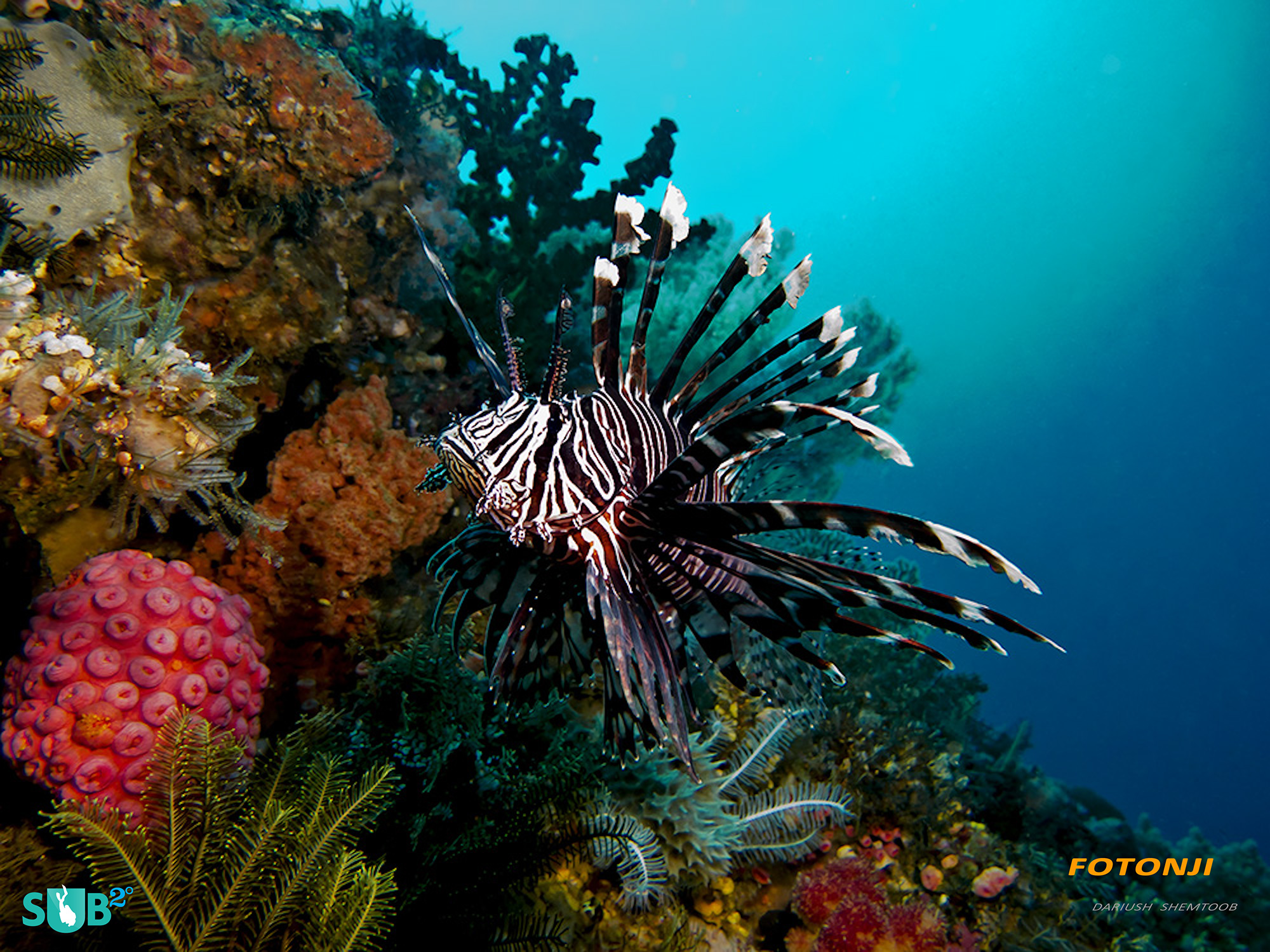 Lionfish at Komodo National Park