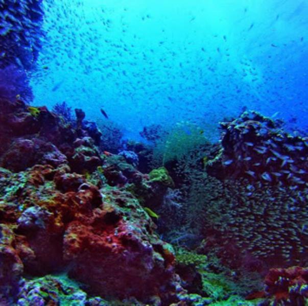 koh-bon-diving