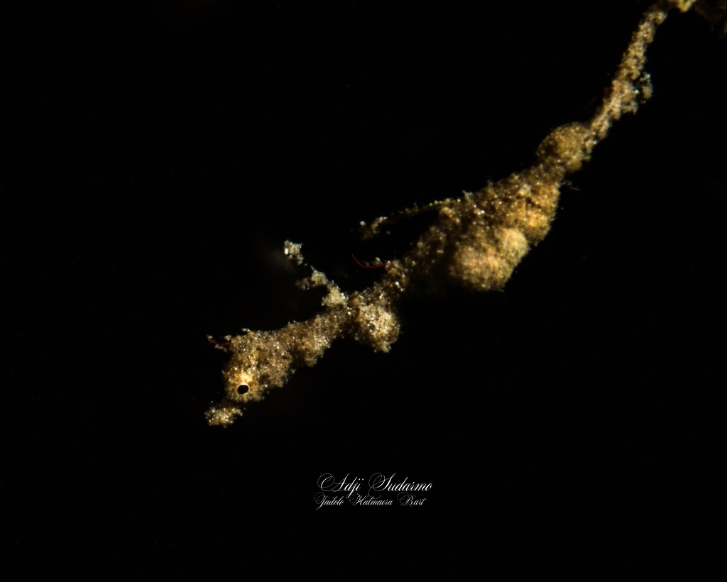 supermacro night dive