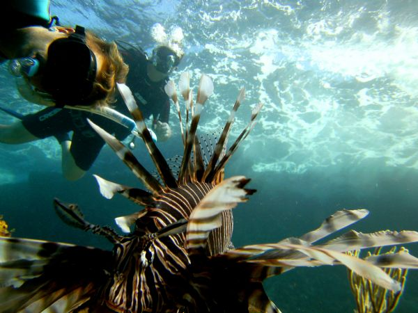 Lion Fish - Picture by Sieebrt Phillippe Camera - SeaLife DC140 Location - Las Terrenas, Dominican Republic