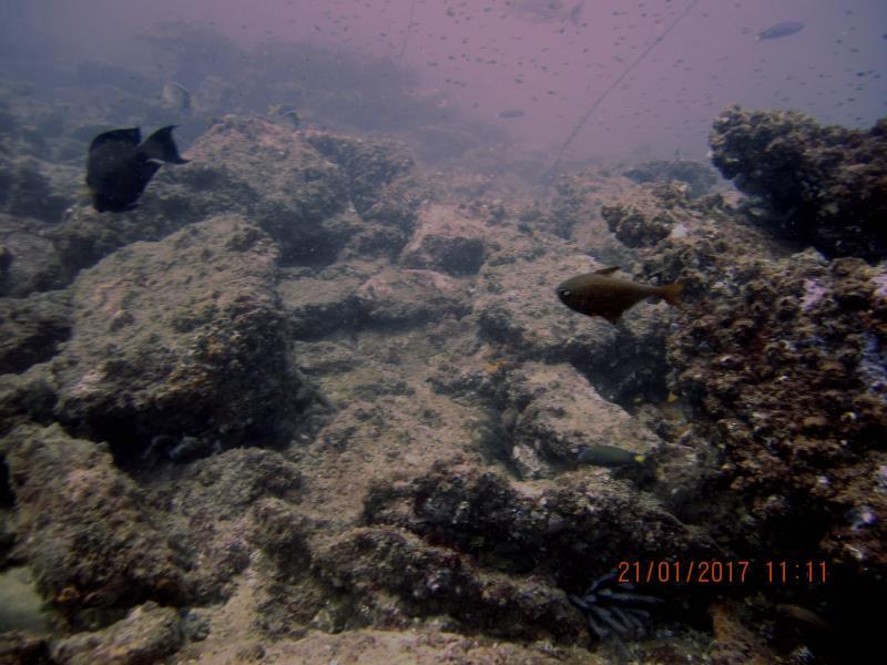 Little fish 6