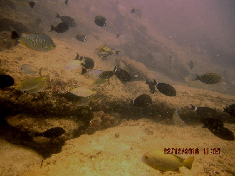 Lots dif fish