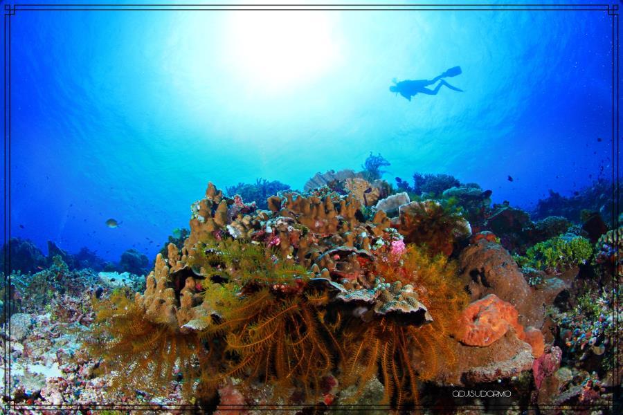Mahoro Island SITARO