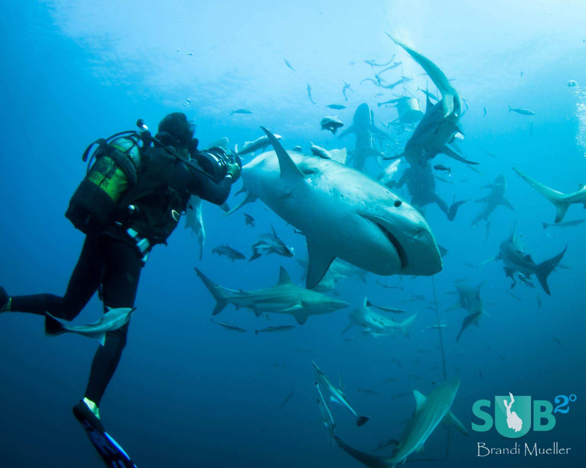 shark cage diving Shark cage diving in gansbaai at shark alley the most densely populated  waters in the world for the great white shark book a trip with us today.