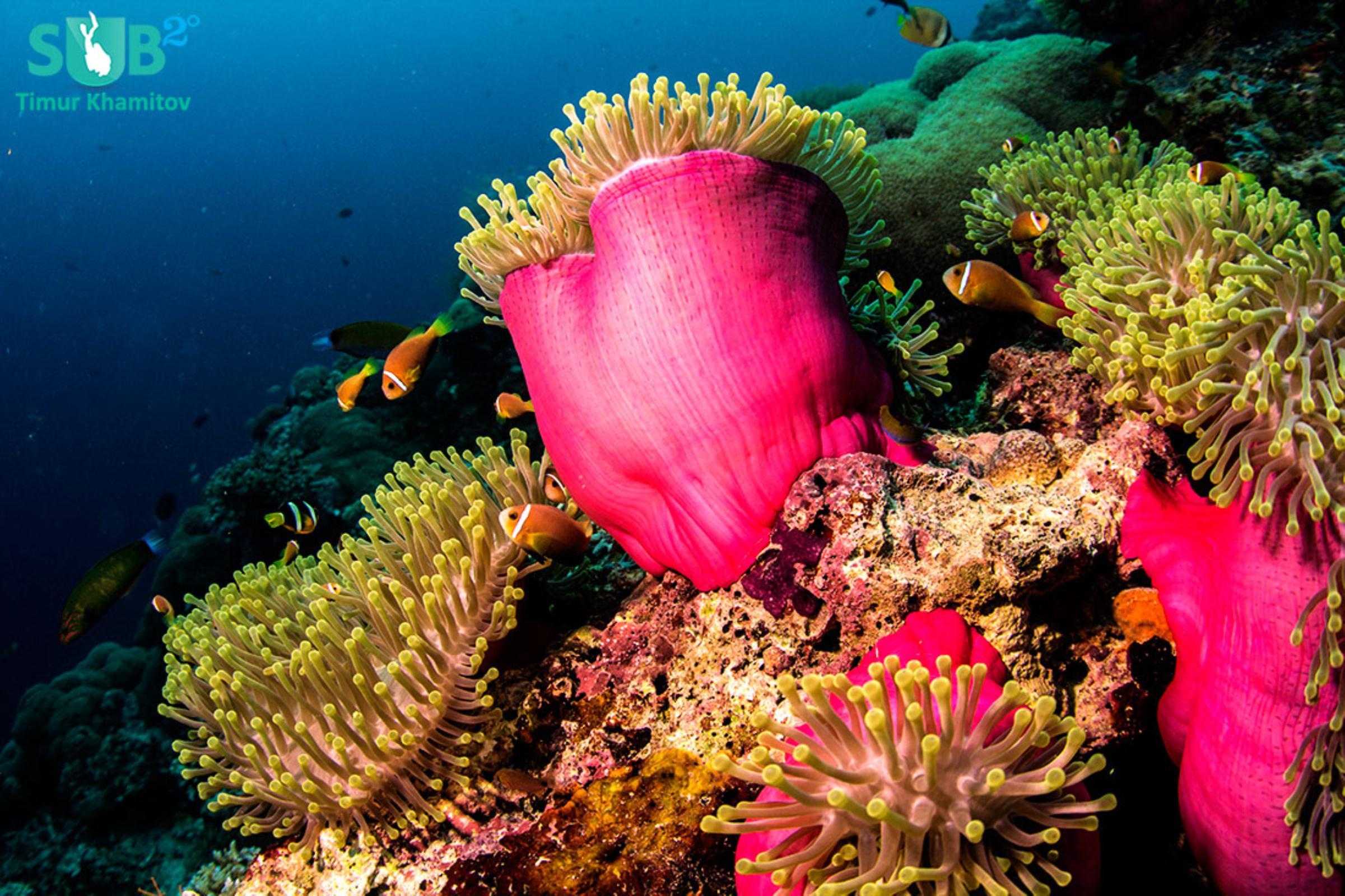 You'll find beautiful, healthy and colorful corals growing underwater in Malaysia, coupled with a diverse marine life.