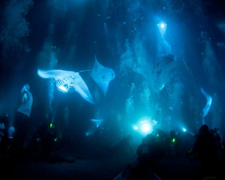 Manta Ray Night Dive