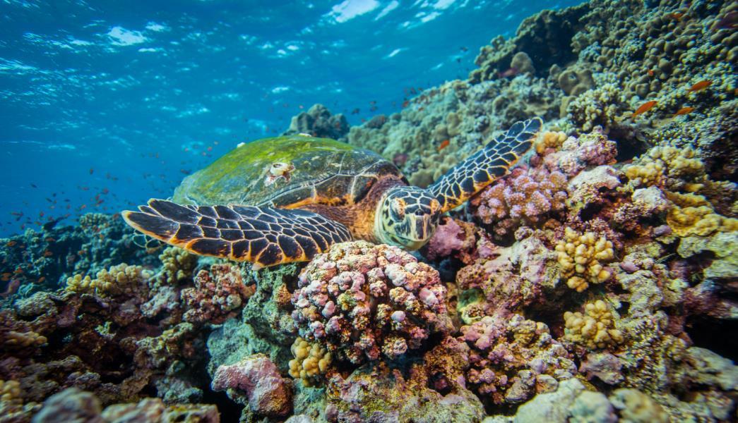 Marine Life Wonders