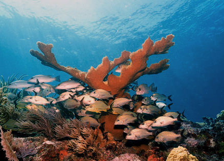 Molasses Reef, one of the most popular scuba diving destinations in North America, has experienced several bleaching events over the last 10 - 20 years.