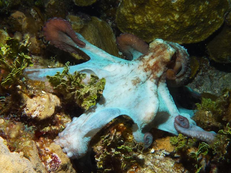 octopus002